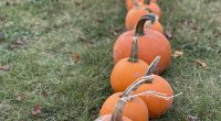 It has been a week since our Pumpkin Patch came to Brentwood Park last Sunday. We are so very thankful to our PAC for bringing the Pumpkin Patch to Brentwood Park this month. We […]